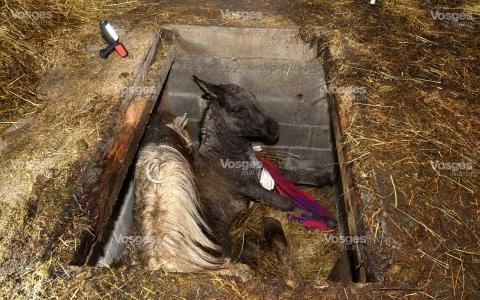 faits-divers-sauvetage-d-un-ane-et-d-un-cheval-dans-une-fosse-photo-philippe-briqueleur-1510953948.jpg