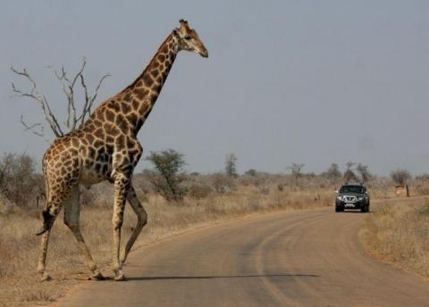 parc-national-kruger-afrique-sud-L-1.jpeg