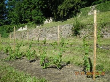 visite Départ fleurs juil 2009 008.jpg