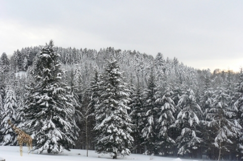 neige varin.JPG